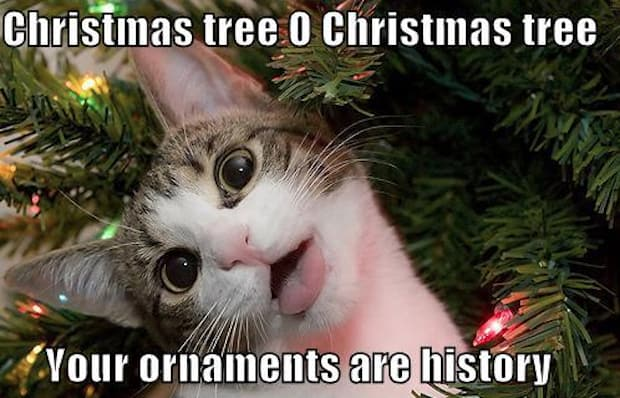 Christmas Tree Cat Joke - Ready to play Christmas Carols before it's too late? http://www.virtualsheetmusic.com/Christmas.html